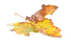 Φθινόπωρο leavs Στοκ φωτογραφία με δικαίωμα ελεύθερης χρήσης
