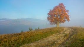Φθινόπωρο misty βουνά πρωινού απόθεμα βίντεο