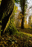 Φθινόπωρο Umbra Foresta, Gargano, Ιταλία στοκ φωτογραφία