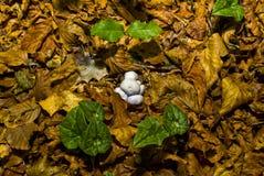 Φθινόπωρο Umbra Foresta, Gargano, Apulia, Ιταλία στοκ φωτογραφία με δικαίωμα ελεύθερης χρήσης