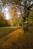 Φθινόπωρο Umbra Foresta, Gargano, Apulia, Ιταλία στοκ εικόνες