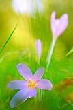 Φθινόπωρο wildflower Στοκ εικόνα με δικαίωμα ελεύθερης χρήσης