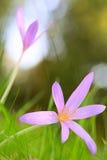 Φθινόπωρο wildflower Στοκ εικόνες με δικαίωμα ελεύθερης χρήσης
