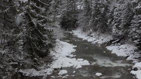 Φιδίσιο ρεύμα μεταξύ των υψηλών ερυθρελατών Carpathians το χειμώνα απόθεμα βίντεο