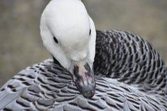 Φιλί του πουλιού στοκ φωτογραφία
