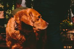Φιλαράκος το σκυλί Στοκ Εικόνες