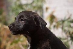 φιλόσοφος σκυλιών στοκ εικόνες με δικαίωμα ελεύθερης χρήσης