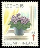 Φινλανδία, αφρικανική βιολέτα