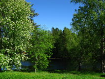 Φινλανδικό τοπίο Στοκ Εικόνα