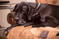 Φιλία σκυλιών γατών Στοκ Φωτογραφία