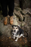 Φιλική συνεδρίαση σκυλιών εκτός από τον ιδιοκτήτη του, σε έναν περίπατο στο δασικό Α κανένα συγκεκριμένο σκυλί φυλής, μιγία Στοκ Φωτογραφία
