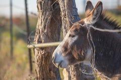Φιλικός μικροσκοπικός γάιδαρος Στοκ φωτογραφίες με δικαίωμα ελεύθερης χρήσης