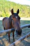 φιλικό άλογο Στοκ φωτογραφίες με δικαίωμα ελεύθερης χρήσης