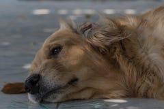 Φιλικό σκυλί στοκ φωτογραφία με δικαίωμα ελεύθερης χρήσης