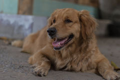 Φιλικό σκυλί Στοκ Εικόνες