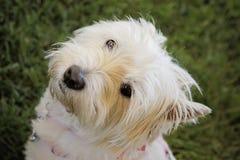 Φιλικό χαριτωμένο σκυλί Στοκ φωτογραφίες με δικαίωμα ελεύθερης χρήσης
