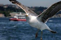 Φιλικό Seagull Στοκ Εικόνες
