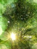 Φιλτράρισμα ήλιων άνοιξη μέσω των δέντρων Στοκ εικόνες με δικαίωμα ελεύθερης χρήσης
