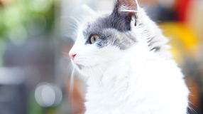 Φιλόδοξη γάτα σκέψης στοκ φωτογραφίες