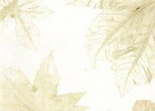 φλέβες φύλλων Στοκ εικόνες με δικαίωμα ελεύθερης χρήσης