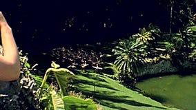 Φλαμίγκο της δεκαετίας του '70 του Μαϊάμι απόθεμα βίντεο