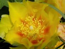 Φλεμένος λουλούδι Στοκ φωτογραφία με δικαίωμα ελεύθερης χρήσης