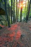 Φλογερό έντονο φως στα φύλλα Στοκ φωτογραφία με δικαίωμα ελεύθερης χρήσης