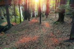 Φλογερό έντονο φως στα φύλλα Στοκ φωτογραφίες με δικαίωμα ελεύθερης χρήσης