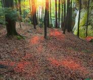 Φλογερό έντονο φως στα φύλλα Στοκ Φωτογραφίες