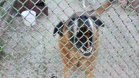 Φλοιοί σκυλιών πίσω από το φράκτη απόθεμα βίντεο