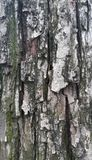 Φλοιός δέντρων αχλαδιών Στοκ φωτογραφία με δικαίωμα ελεύθερης χρήσης
