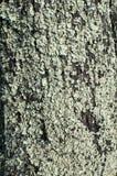 Φλοιός δέντρων με το βρύο Στοκ φωτογραφίες με δικαίωμα ελεύθερης χρήσης