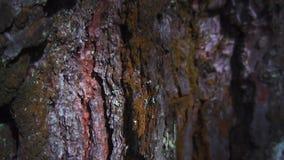 Φλοιός δέντρων, ξύλινη κινηματογράφηση σε πρώτο πλάνο υποβάθρου φιλμ μικρού μήκους