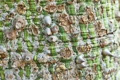 Φλοιός δέντρων στους πράσινους καφετιούς τόνους στοκ εικόνα