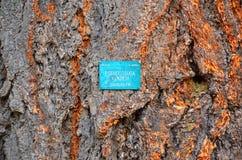 Φλοιός δέντρων του FIR Ντάγκλας στοκ εικόνες