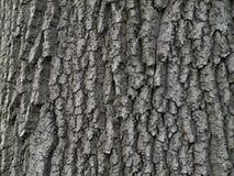 Φλοιός δέντρων στοκ φωτογραφίες