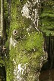 Φλοιός ενός δέντρου Στοκ Φωτογραφία