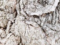 Φλοιός ενός παλαιού νεκρού δέντρου Στοκ εικόνα με δικαίωμα ελεύθερης χρήσης
