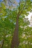 φλοιός κάτω από το NIC δέντρο ορατό Στοκ Εικόνα