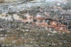 φλοιός καλαμποκιού moldy Στοκ εικόνα με δικαίωμα ελεύθερης χρήσης