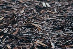 Φλοιός που καλύπτεται φυσικός από τον παγετό πρωινού Στοκ Φωτογραφίες