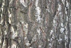 Φλοιός φύσης δέντρων, σύσταση οδών σύστασης φύσης στοκ εικόνες