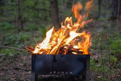 Φλόγα μιας πυρκαγιάς σε μια σχάρα σε ένα πράσινο δάσος στοκ εικόνα