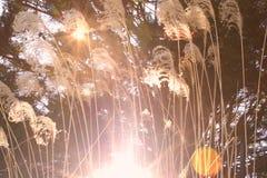 Φλόγα φύσης στοκ εικόνα