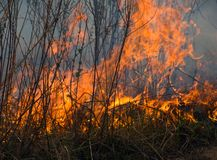 φλόγα 5 Στοκ φωτογραφία με δικαίωμα ελεύθερης χρήσης