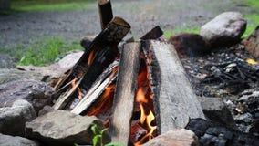 Φλόγες φωτιών της πυρκαγιάς στρατοπέδευσης, καίγοντας καυσόξυλο Όμορφη πυρά προσκόπων υπαίθρια απόθεμα βίντεο