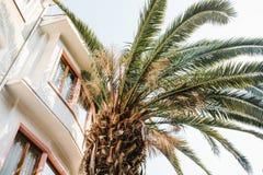 Φοίνικας δίπλα σε ένα σπίτι σε μια εξωτική χώρα στοκ φωτογραφίες