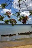 Φοίνικας βαρκών κλάδων της Μαδαγασκάρης Στοκ Φωτογραφίες