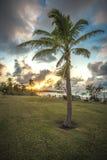 Φοίνικας ηλιοβασιλέματος στοκ φωτογραφία με δικαίωμα ελεύθερης χρήσης