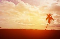 Φοίνικας και άνθρωποι καρύδων σκιαγραφιών στην παραλία με τον ουρανό ηλιοβασιλέματος Στοκ Φωτογραφίες